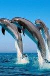 Дельфины в искусстве